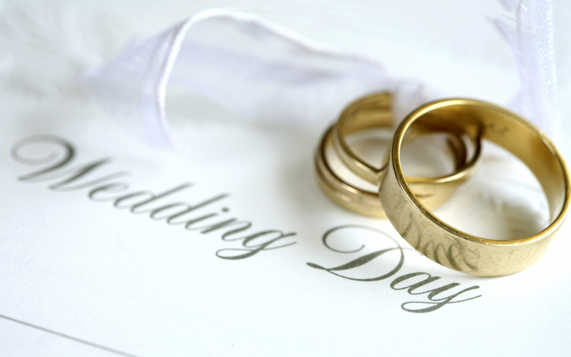 Wallpapers for Desktop with background, cat, marriage, rings, wedding, wallpaper, scenery, language